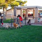 Glendale Cascade is pet friendly with a fenced in pet area. Dogs and cats run leash free while kids watch on and sit at the surrounding picnic tables with umbrellas. A mother talks with a little girl that is petting a cat. An older girl gets ready to skateboard