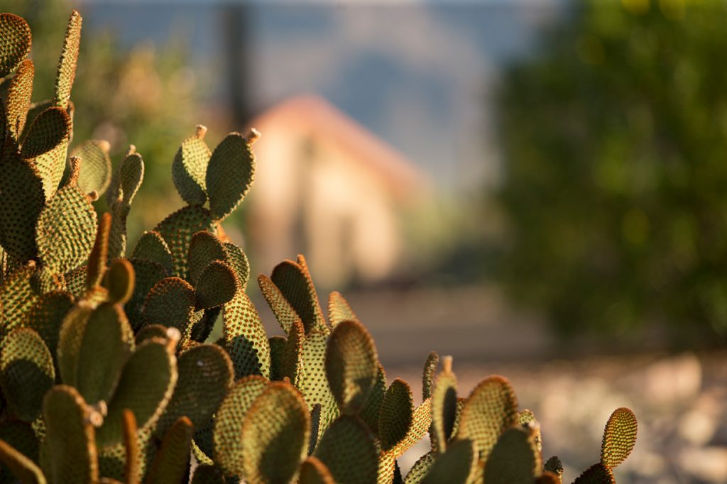 Plenty of cacti to see around the community of Montesa at Gold Canyon.