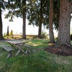Picnic table and benches amongst tall trees.
