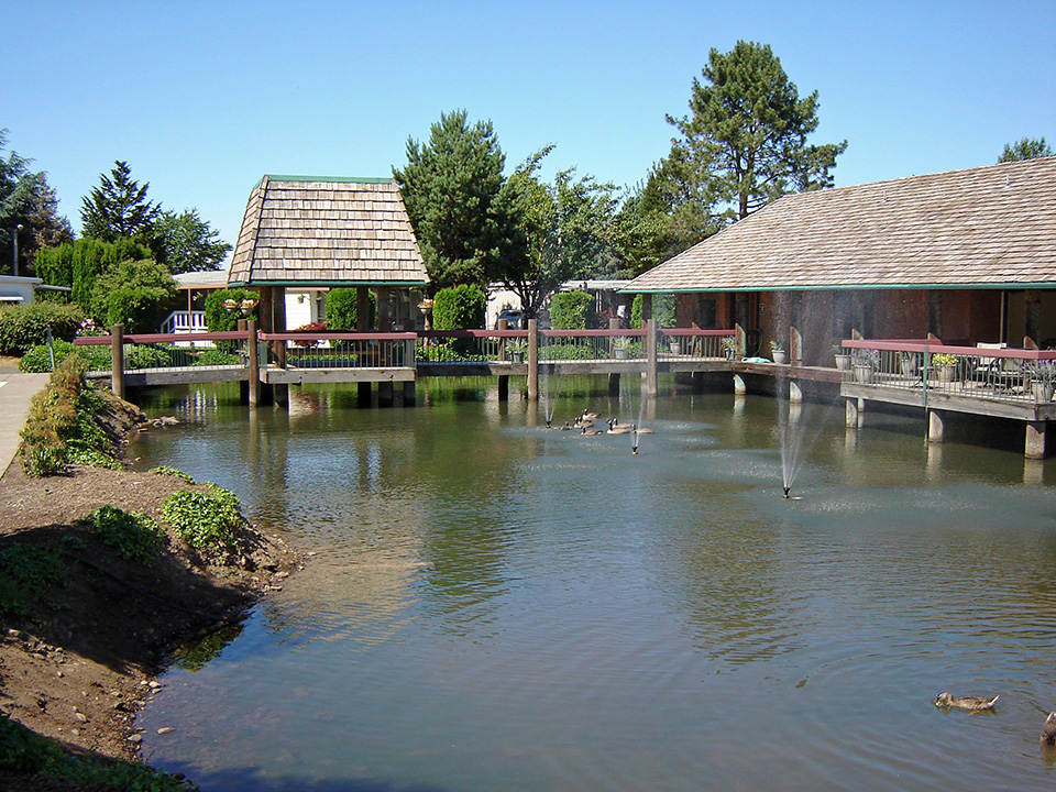 The pond is around the clubhouse with a bridge to and from. More ducks are swimming.