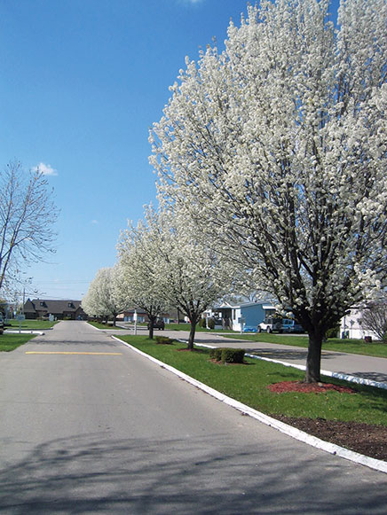 Beautiful trees engulfed in white flowers grow in the median at entryway to Gettysburg Estates.
