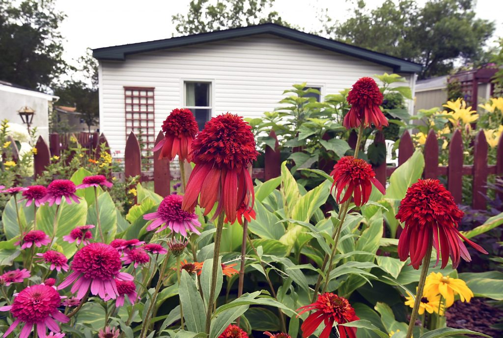 Beautiful red, fushia and yellow flowers are planted in backyard of residents home.