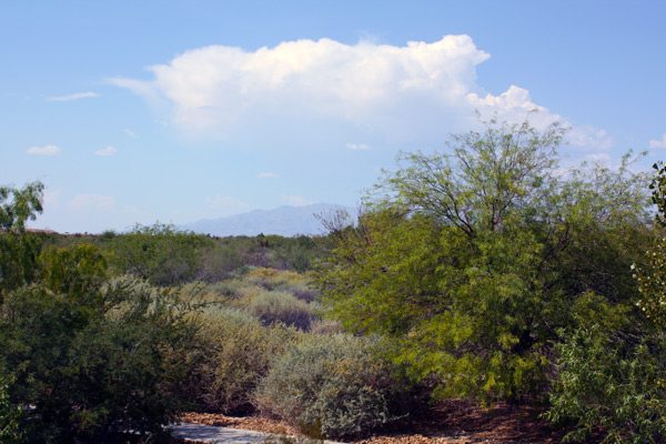 Paved trail through the wetlands. Desert landscape with green trees and shrubs. Silhouette of mountain in far distance.