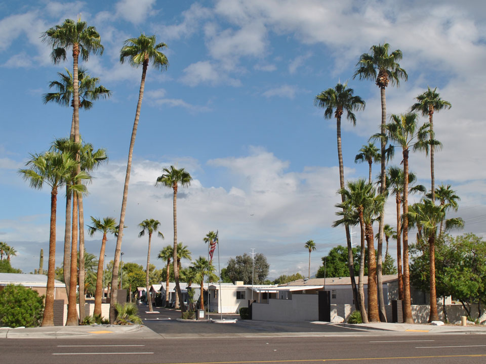 Chaparral Village, an All-Age manufactured home community, displays very tall palm trees at entrance to community.