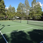 Two pickleball courts. Clean and quiet. Surrounded by lush tall trees.