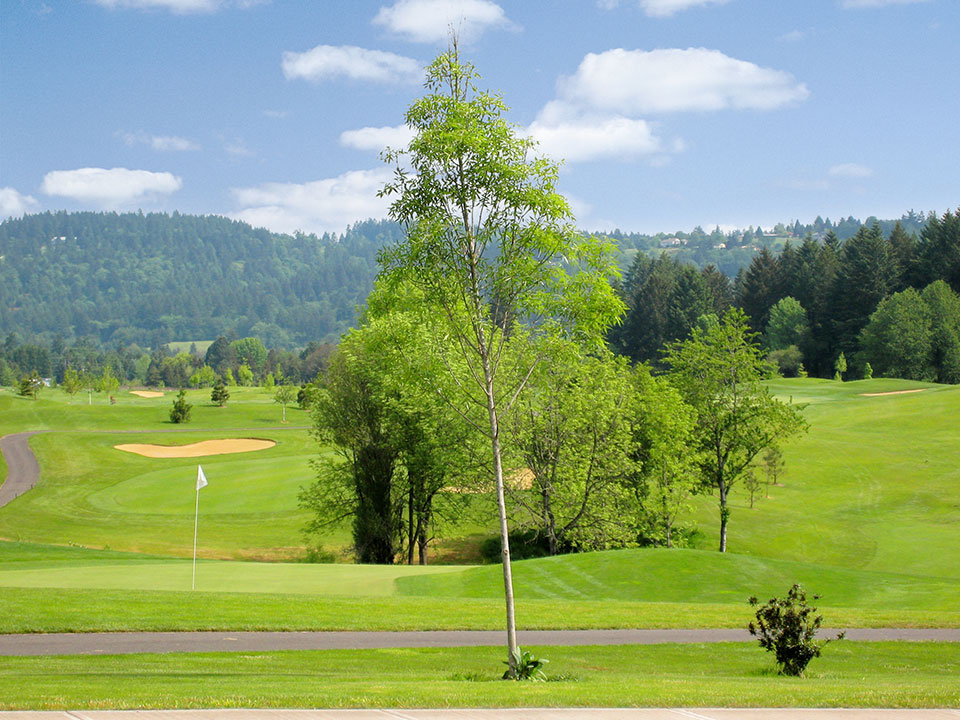 Beautiful, large, open, and green golf course. Luscious trees throughout with a beautiful view of the mountains filled with large, green trees.