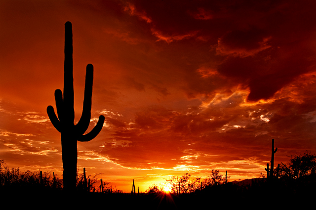 Beautiful sunset over the desert. Sky glows orange, yellow, red through the clouds and silhouette of cactus.