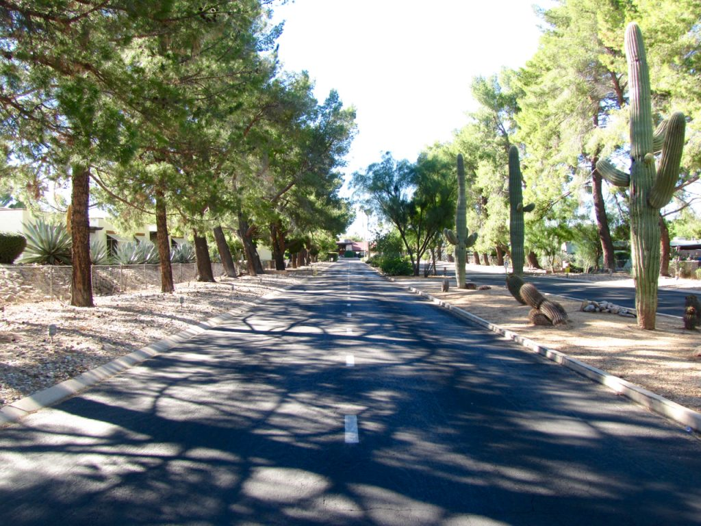 Driveway of entrance of Far Horizons East is lined with lush trees on both sides and cacti along the median.